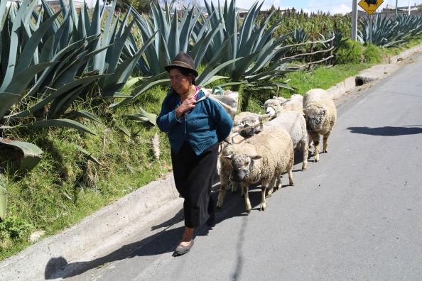 Morning work in an Andean village near Riobamba, Ecuador